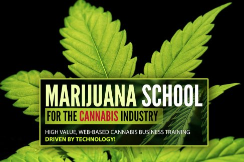 Cannabis affiliate program 10