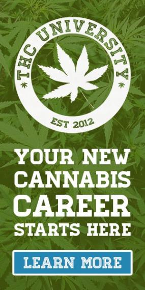 Cannabis affiliate program 11